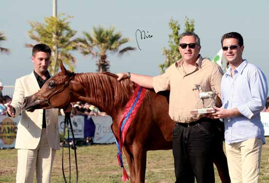 SHOWS AND EVENTS DA Afrika Reserve ROZKA ROSE 2 a Cl. Puledre di 1 anno/2 a Pl.Yearling Fillies ANTHARA 3 a Cl. Puledre di 1 anno/3 a Pl.Yearling Fillies MAGIC PERFECTION 2 a Cl.