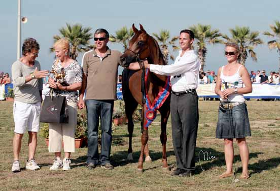 Champion Psynata KALI MAL 1 a Cl. Puledre di 3 anni/1 a Pl. Fillies 3 years old HABIBIANA STAR 2 a Cl. Puledre di 3 anni/2 a Pl. Fillies 3 years old EK NATHICE 3 a Cl.