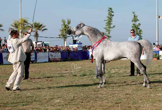SHOWS AND EVENTS Sandhiran Reserve MONOGRAMM JM 2 Cl. Stalloni 4/5/6/2 Pl. Stallions 4/5/6 years old PERKAM DE LA FON 3 Cl. Stalloni 4/5/6/3 Pl.