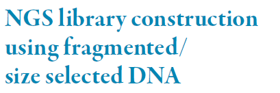 With the exception of Illumina s Nextera prep, library preparation generally entails: (i) Fragmentation, size selection, end-repair, phosphorylation of the 5 prime ends, A-tailing of the 3 ends to