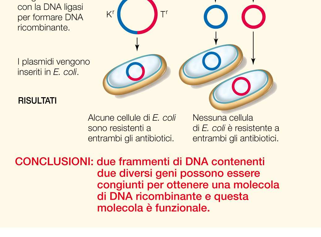 sequenze diverse di DNA per