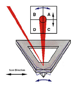 AFM Friction Friction causes twist of cantilever causing lateral deflection Twist is proportionnal to friction force.