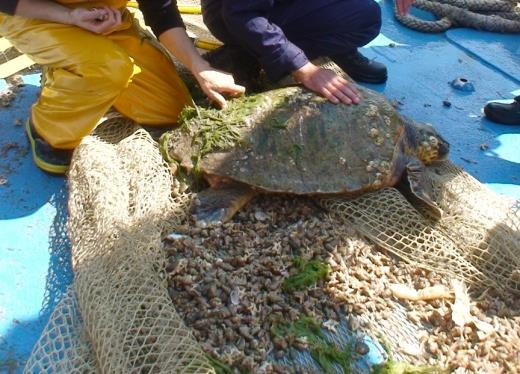 TARTANET: A NETWORK FOR THE CONSERVATION OF SEA TURTLES IN ITALY (LIFE 04