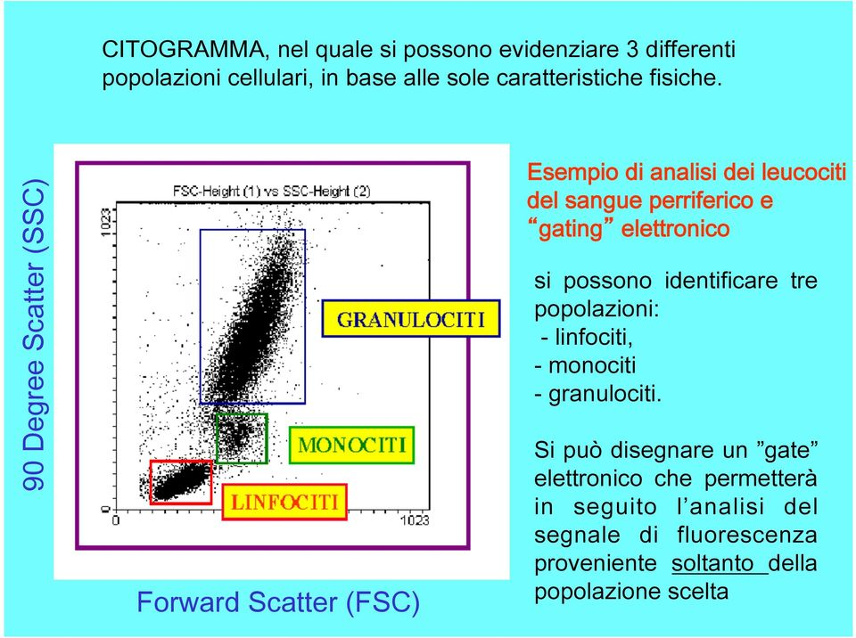 90 Degree Scatter (SSC) Forward Scatter (FSC) Esempio di analisi dei leucociti del sangue perriferico e gating