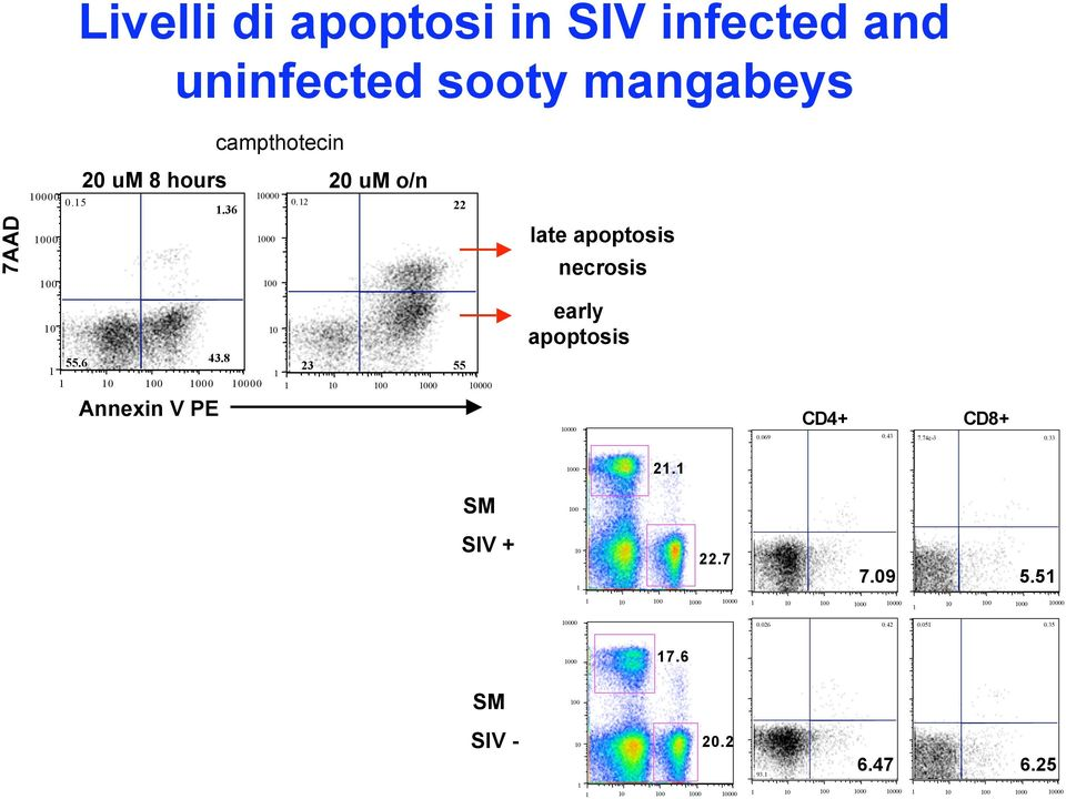 8 23 55 Annexin V PE late apoptosis necrosis early apoptosis CD4+.69.