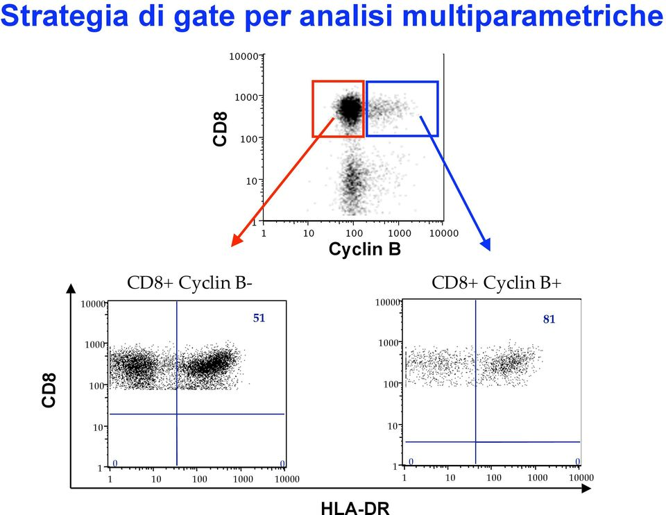 CD8 Cyclin B CD8+ Cyclin