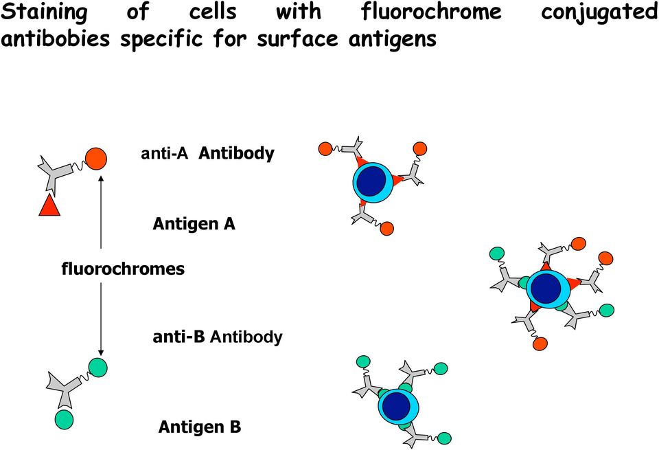 surface antigens anti-a Antibody