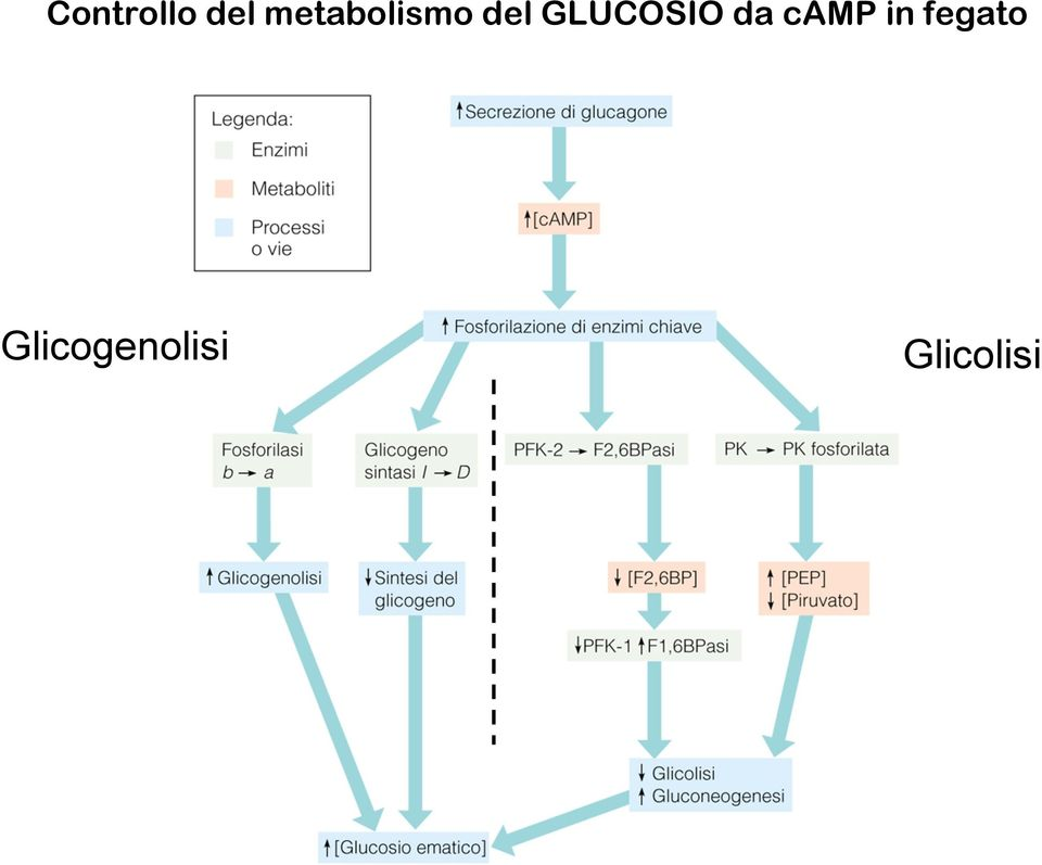 GLUCOSIO da camp in