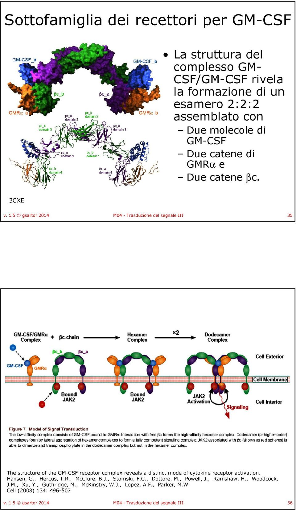 5 gsartor 2014 M04 - Trasduzione del segnale III 35 The structure of the GM-CSF receptor complex reveals a distinct mode of cytokine receptor activation.