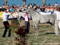 In second place was *Armin Moniscione (Psytadel x Armonia) owned by Marco Moretti whereas third was *Litrayan ibn Walkir (OR Walkir x DC Manaba