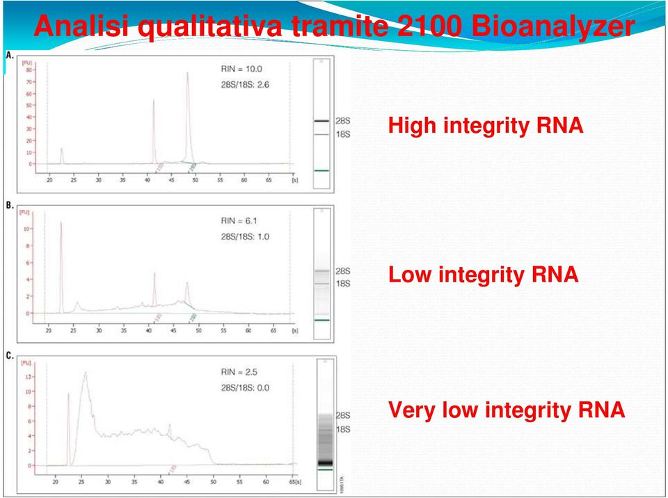 High integrity RNA Low