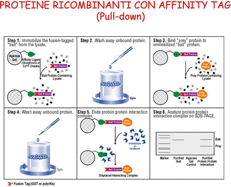 CON AFFINITY