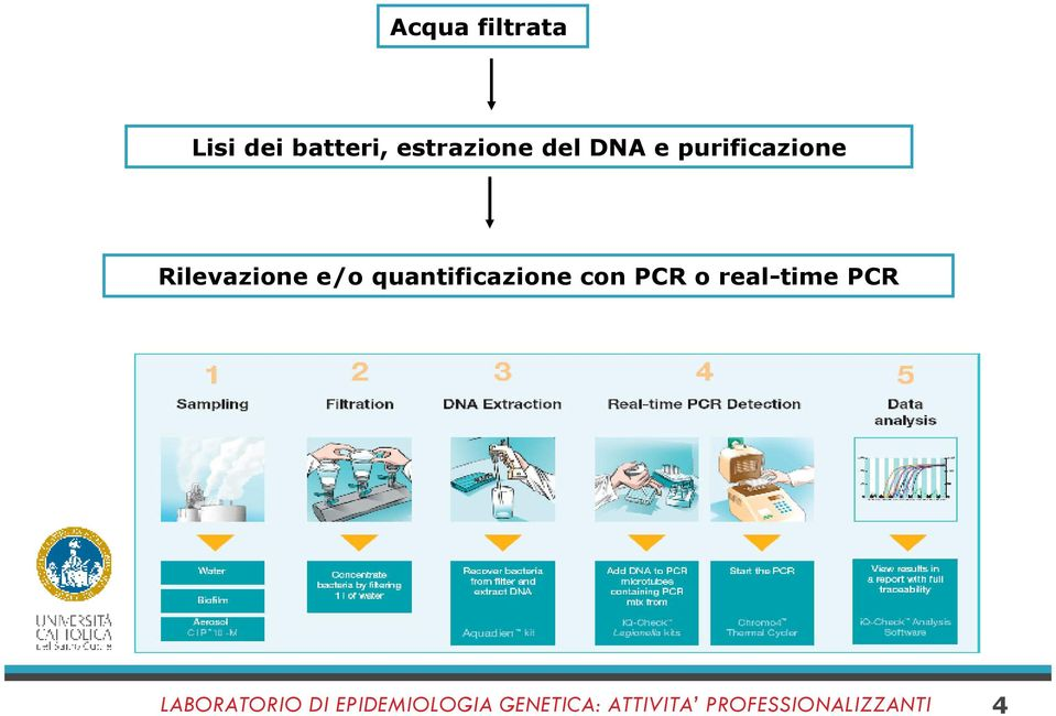 quantificazione con PCR o real-time PCR