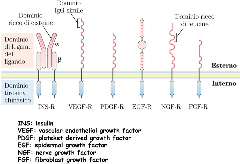 factor EGF: epidermal growth factor NGF: