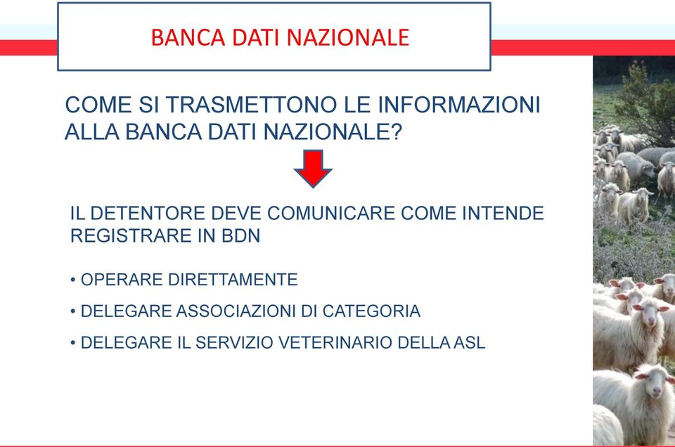 IL DETENTORE DEVE COMUNICARE COME INTENDE REGISTRARE IN BDN
