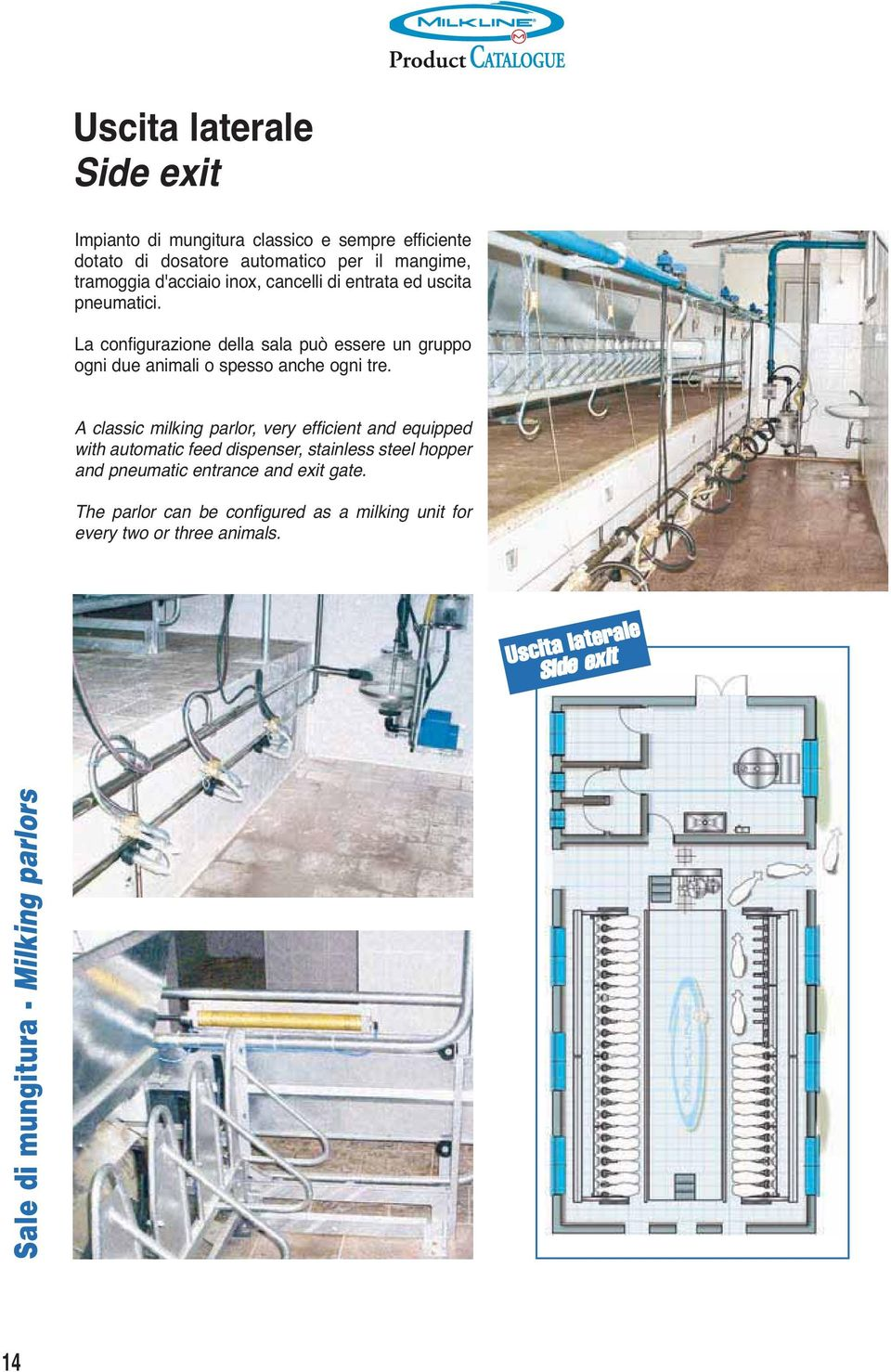 A classic milking parlor, very efficient and equipped with automatic feed dispenser, stainless steel hopper and pneumatic entrance and exit
