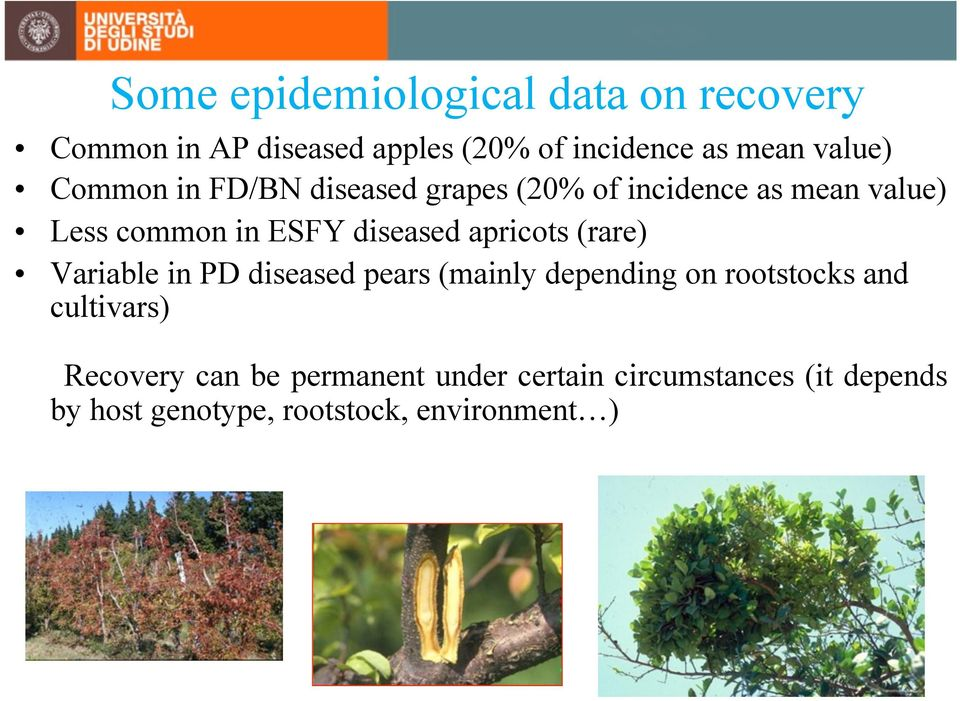 diseased apricots (rare) Variable in PD diseased pears (mainly depending on rootstocks and