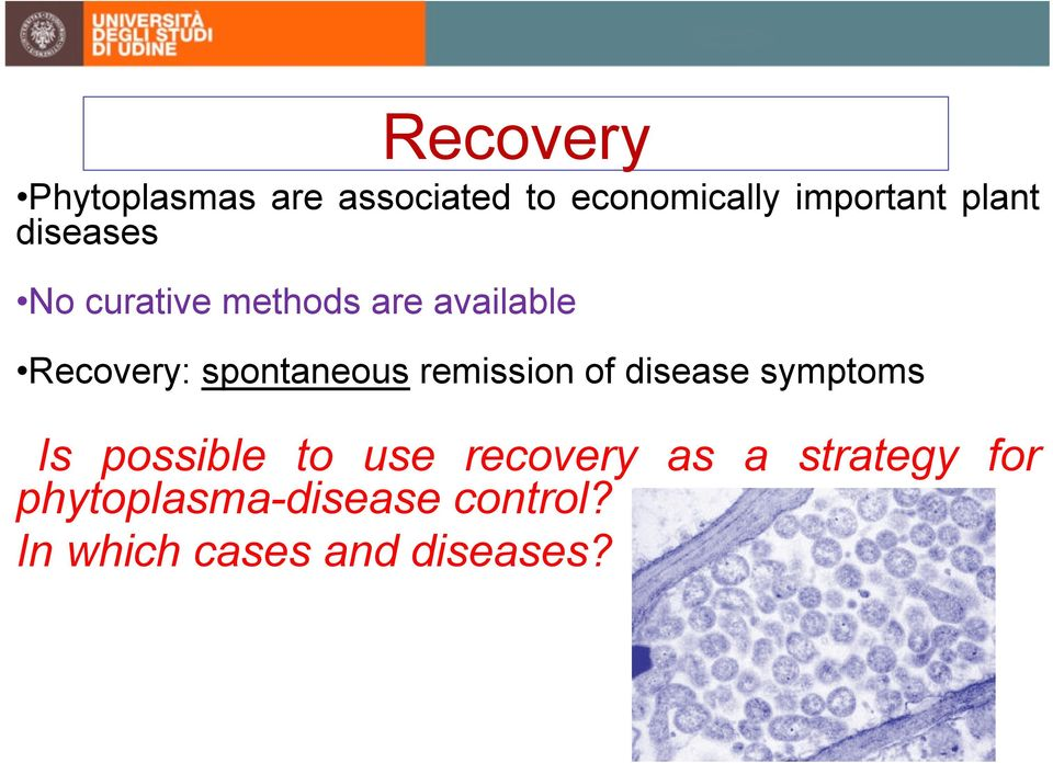 spontaneous remission of disease symptoms Is possible to use