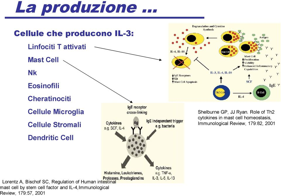 Regulation of Human intestinal mast cell by stem cell factor and IL-4,Immunological Review,