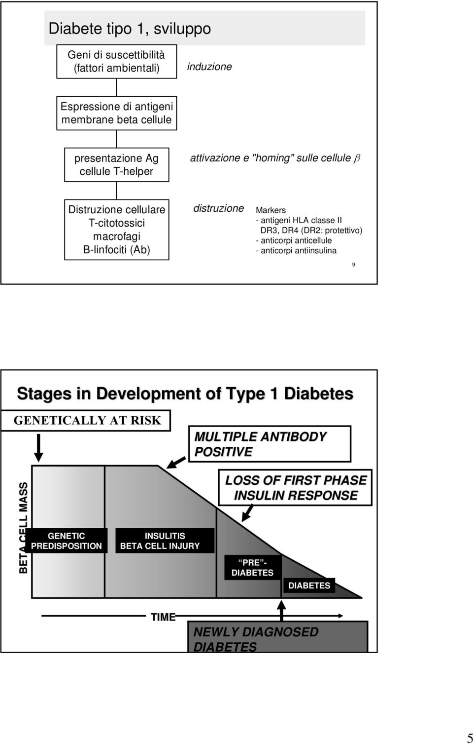 DR3, DR4 (DR2: protettivo) - anticorpi anticellule - anticorpi antiinsulina 9 Stages in Development of Type 1 Diabetes GENETICALLY AT RISK MULTIPLE ANTIBODY