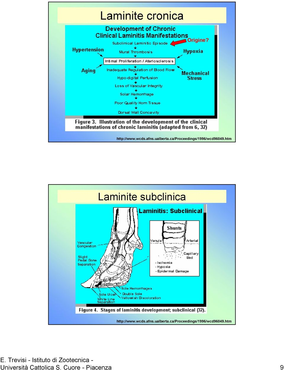 htm Laminite subclinica http://www.wcds.afns.