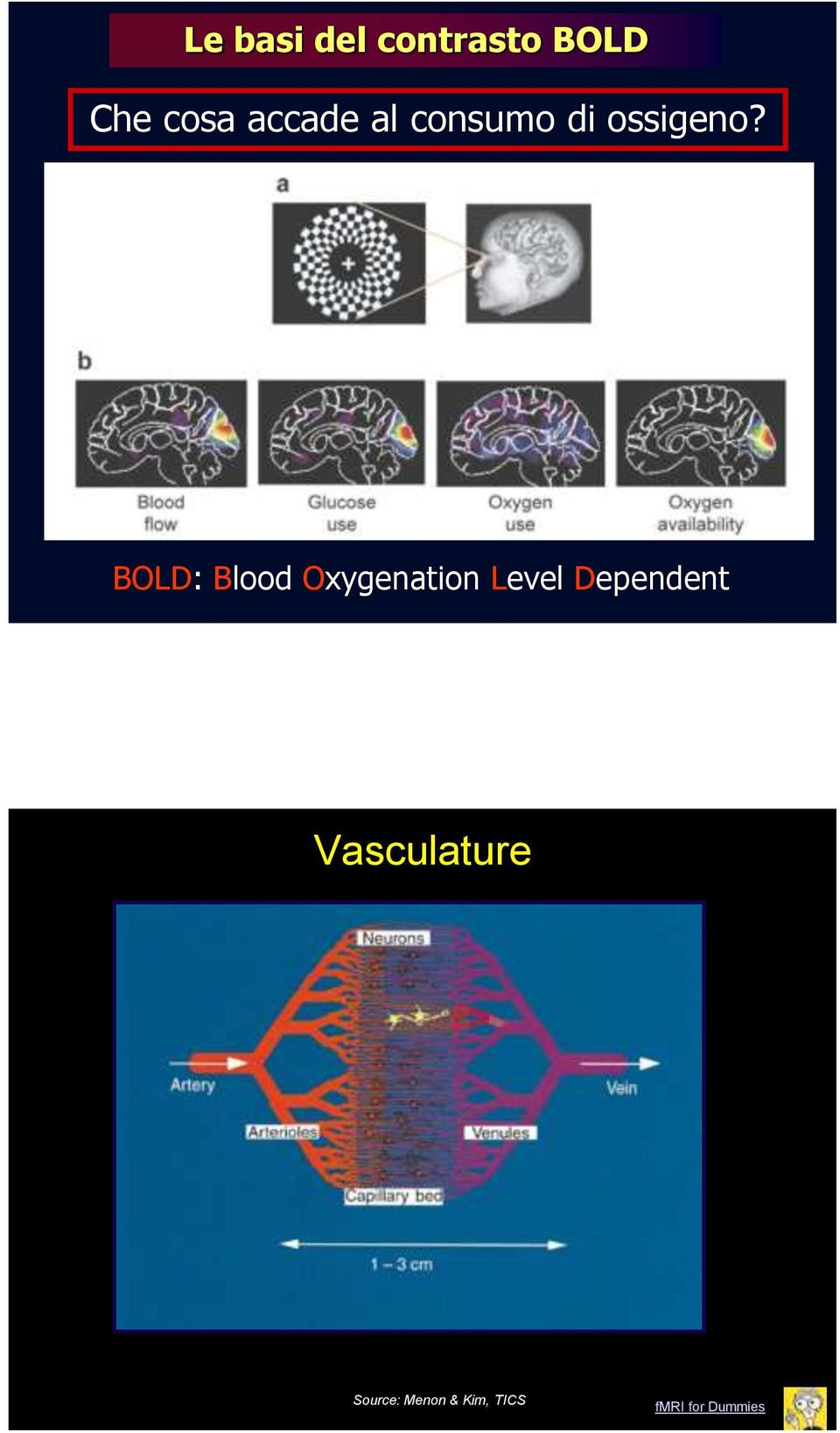 BOLD: Blood Oxygenation Level Dependent