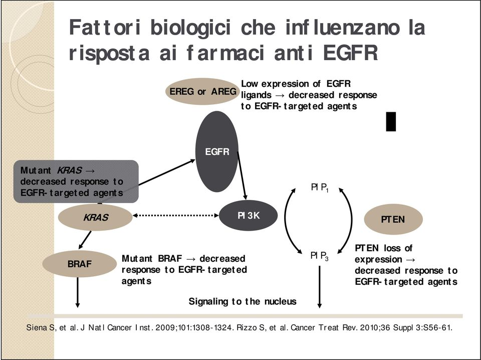 BRAF decreased response to EGFR-targeted agents PIP 3 PTEN loss of expression decreased response to EGFR-targeted agents