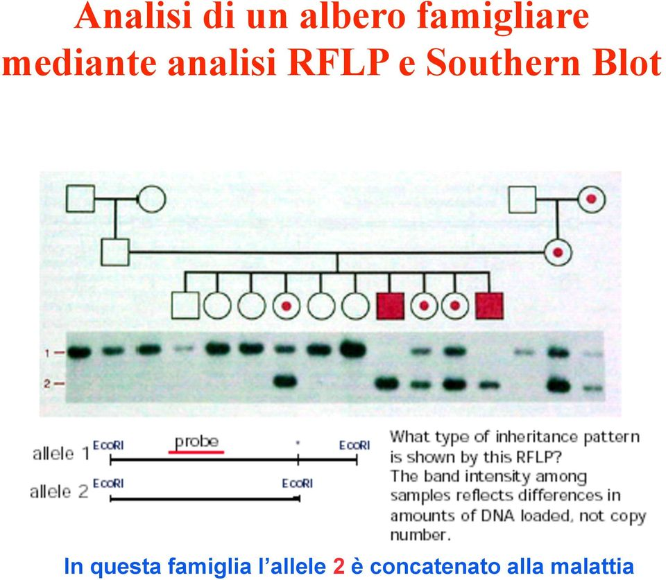 Southern Blot In questa