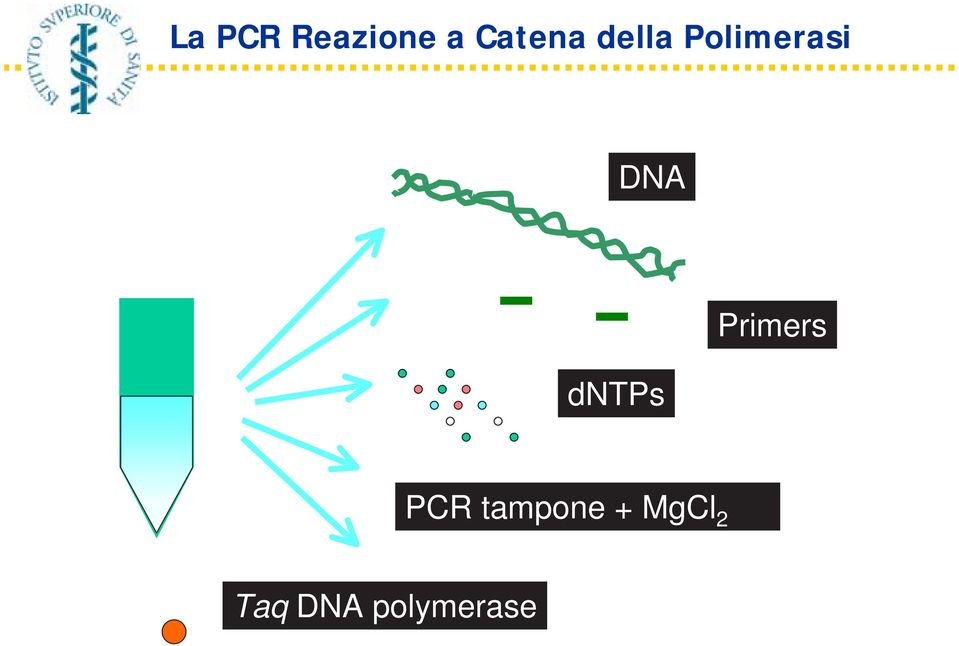 dntps Primers PCR