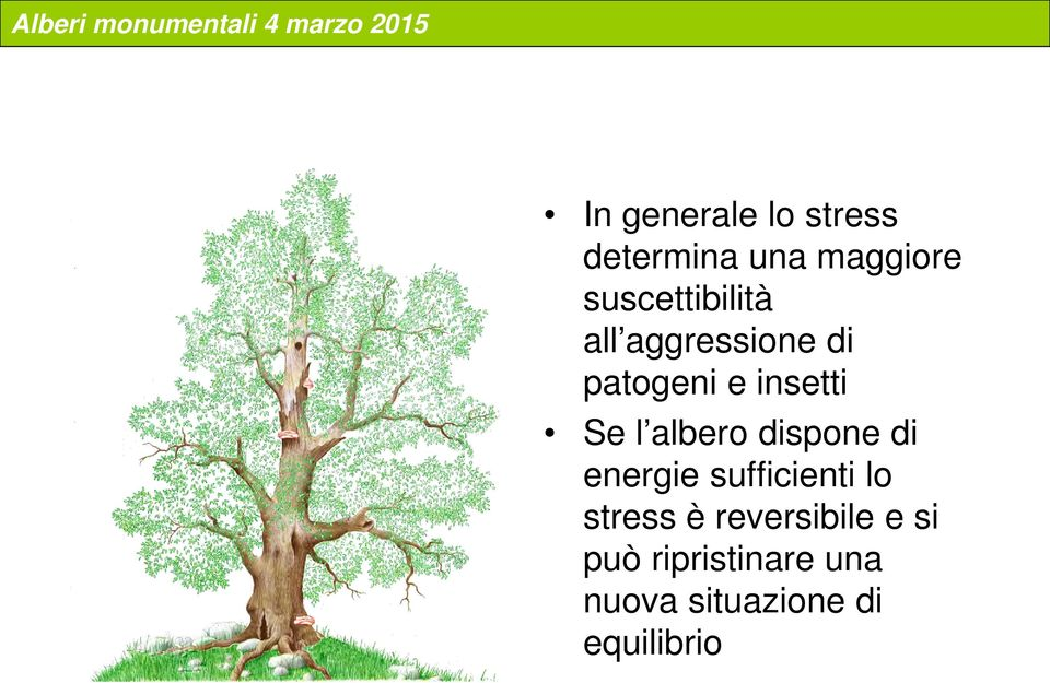 l albero dispone di energie sufficienti lo stress è