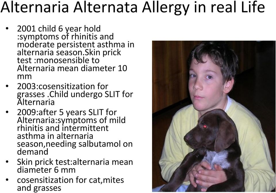 child undergo SLIT for Alternaria 2009:after 5 years SLIT for Alternaria:symptoms of mild rhinitis and intermittent asthma