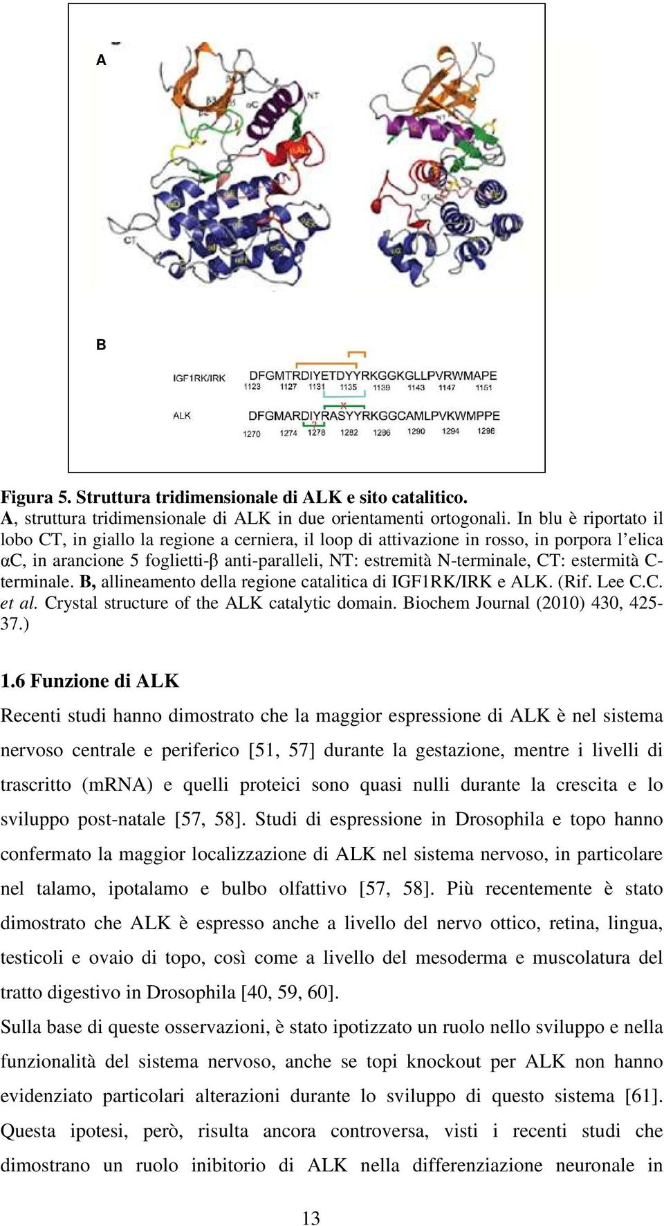 estermità C- terminale. B, allineamento della regione catalitica di IGF1RK/IRK e ALK. (Rif. Lee C.C. et al. Crystal structure of the ALK catalytic domain. Biochem Journal (2010) 430, 425-37.) 1.