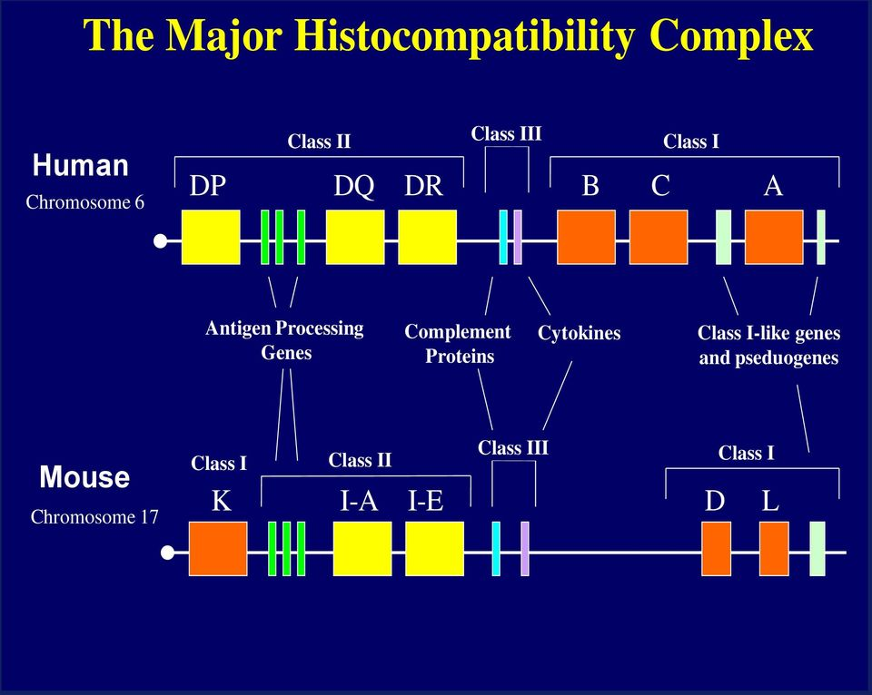 Complement Proteins Cytokines Class I-like genes and