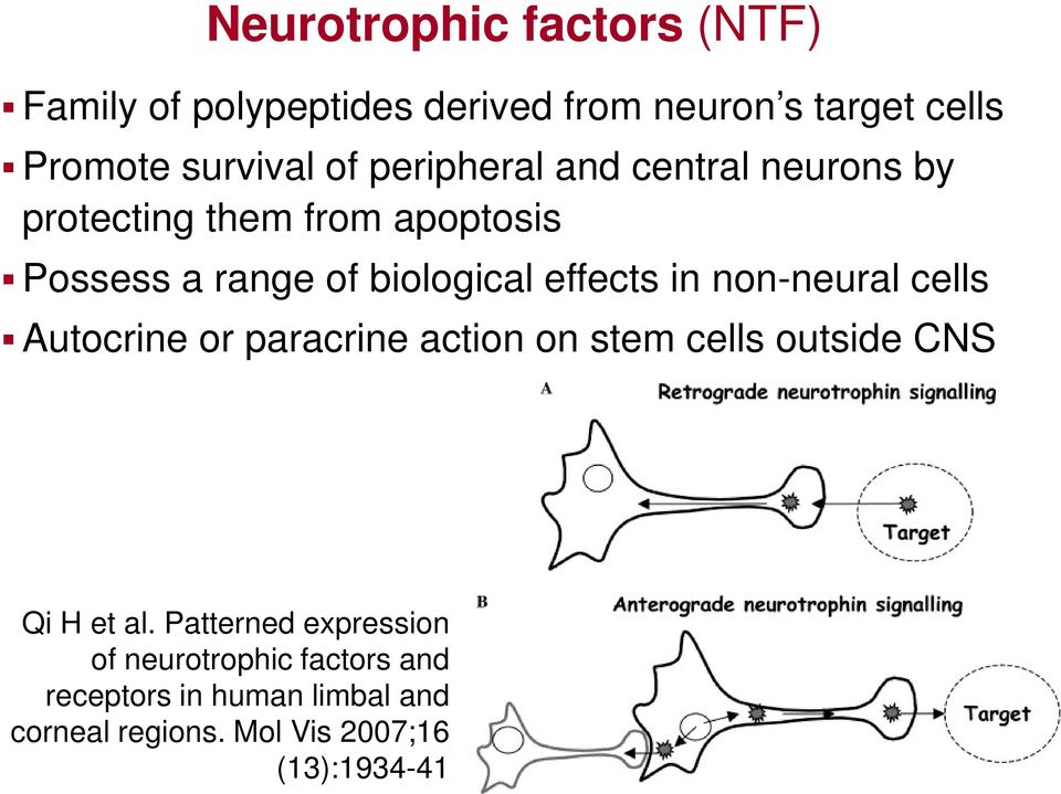 in non-neural cells Autocrine or paracrine action on stem cells outside CNS Qi H et al.