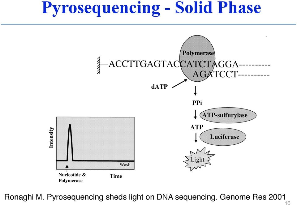 Pyrosequencing sheds