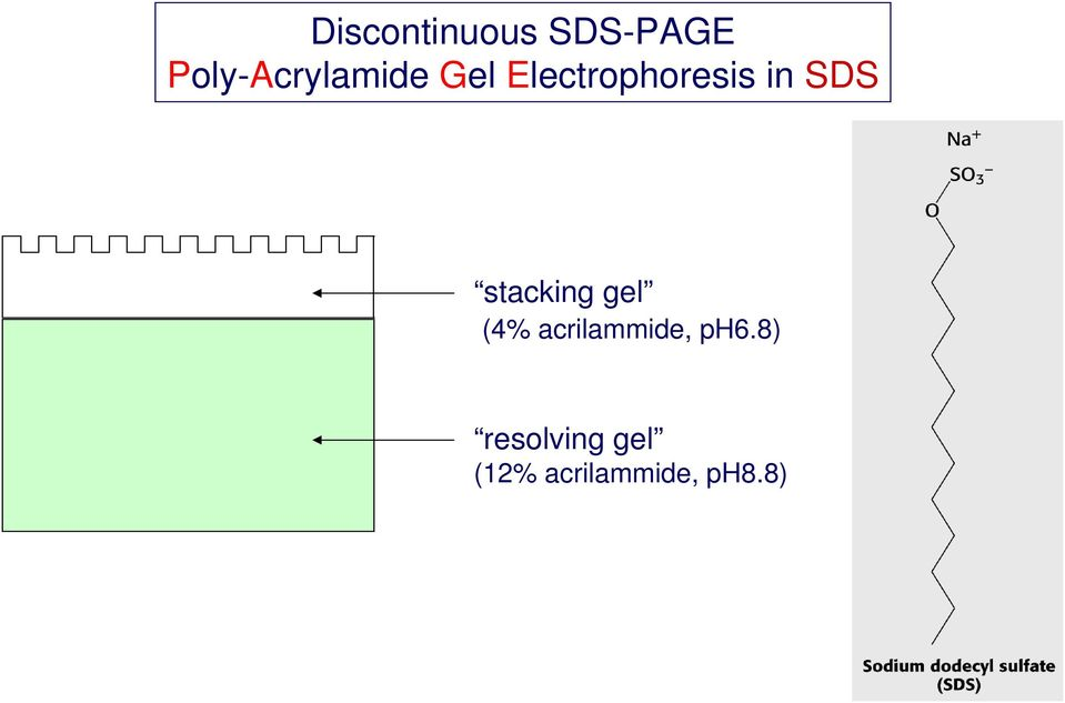 in SDS stacking gel (4%