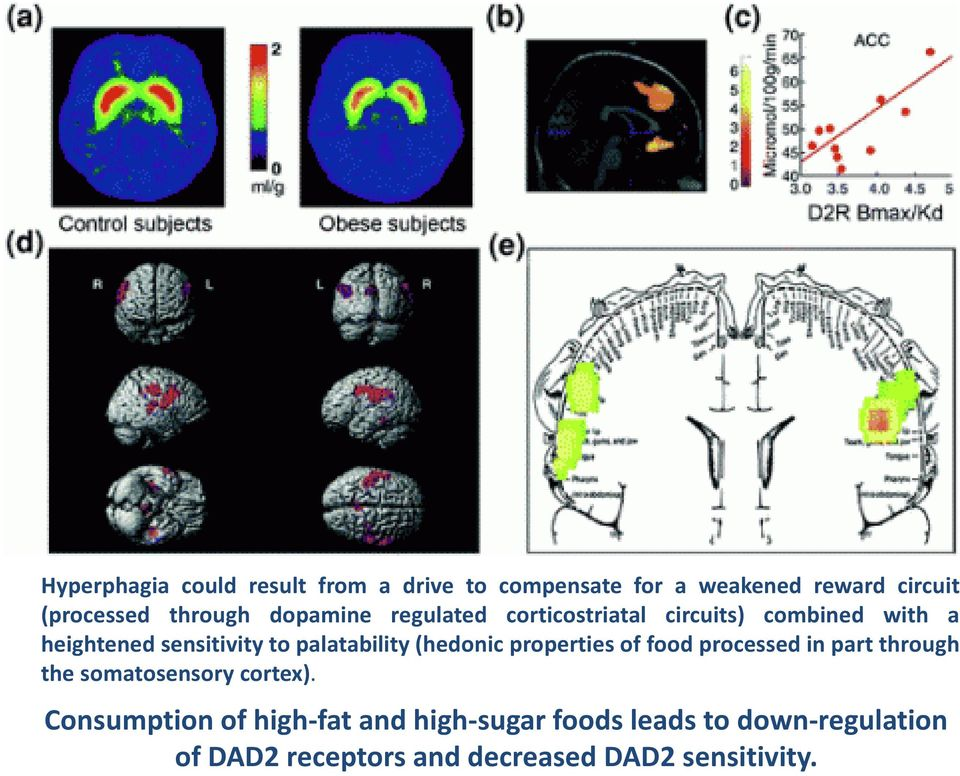 (hedonic properties of food processed in part through the somatosensory cortex).