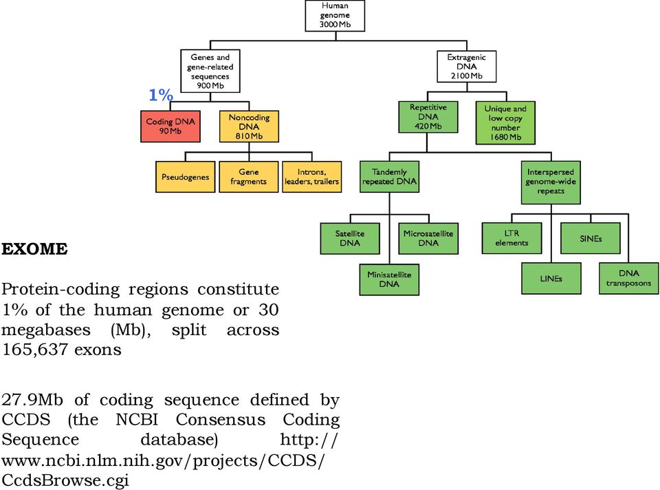 9Mb of coding sequence defined by CCDS (the NCBI Consensus Coding