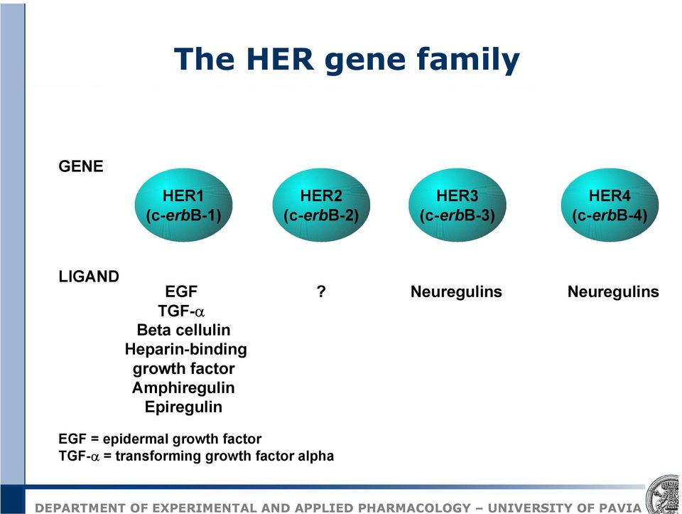 Heparin-binding growth factor Amphiregulin Epiregulin?