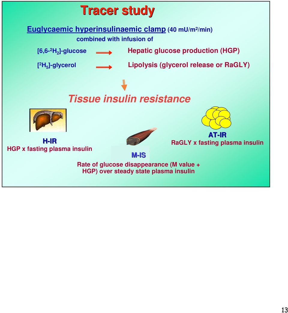 RaGLY) Tissue insulin resistance H-IR HGP x fasting plasma insulin M-IS IS Rate of glucose