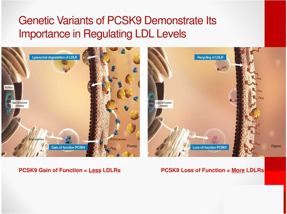 Levels PCSK9 Gain of Function = Less