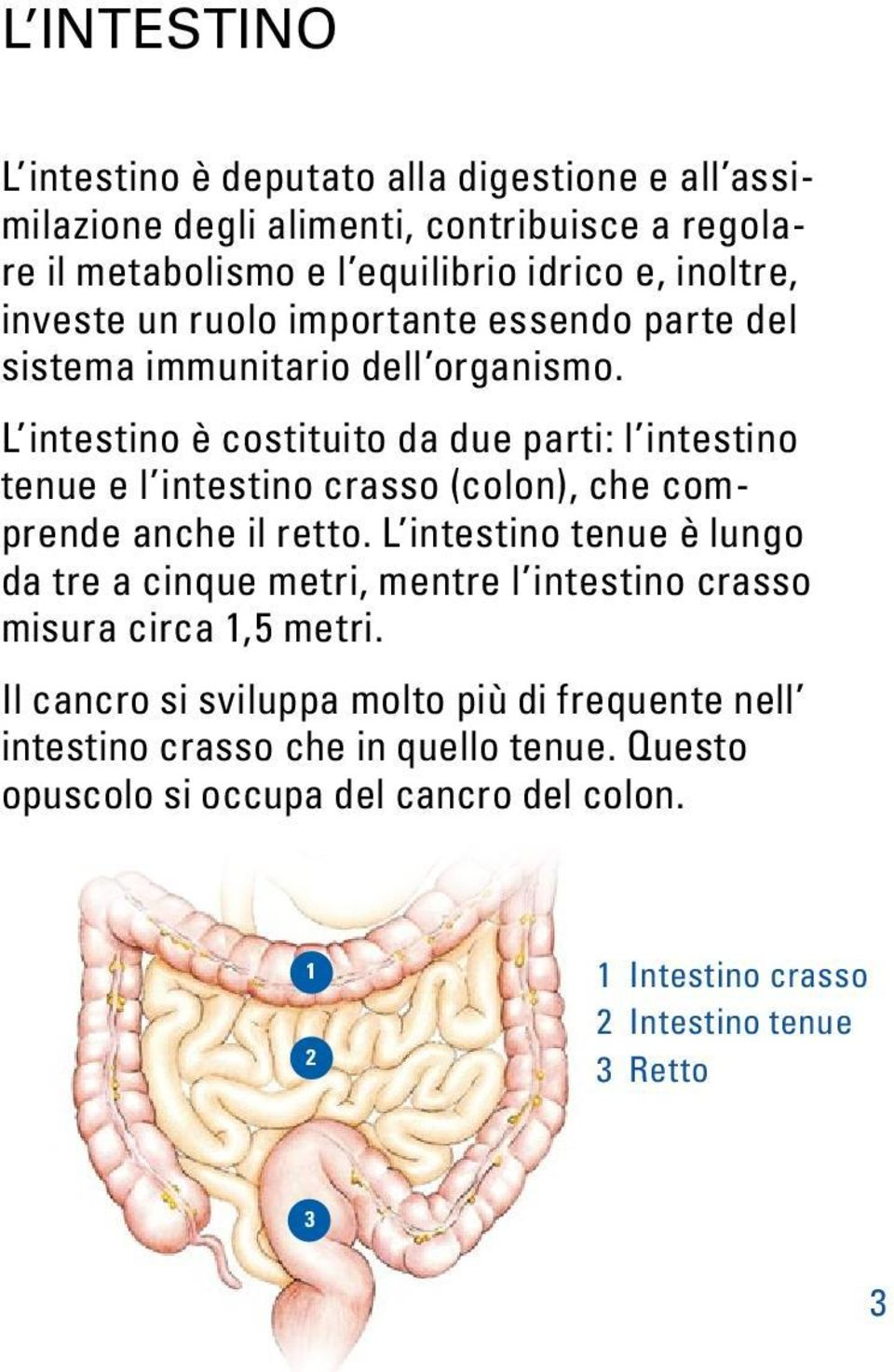 L intestino è costituito da due parti: l intestino tenue e l intestino crasso (colon), che comprende anche il retto.