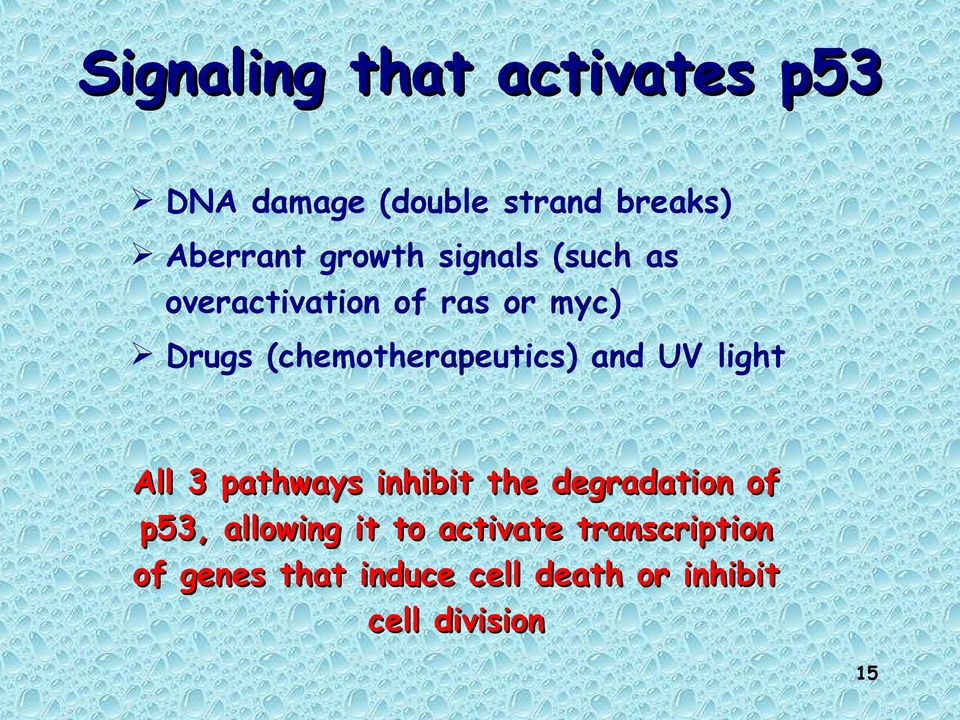 (chemotherapeutics) and UV light All 3 pathways inhibit the degradation of
