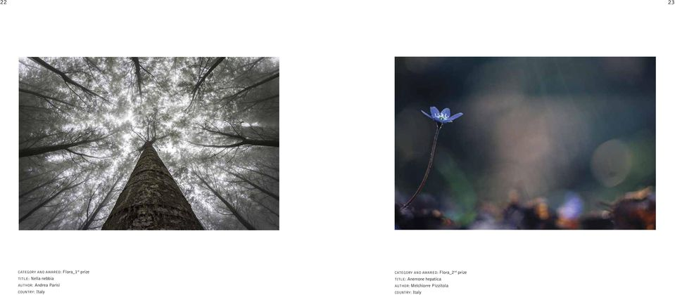 CATEGORY AND AWARED: Flora_2 nd