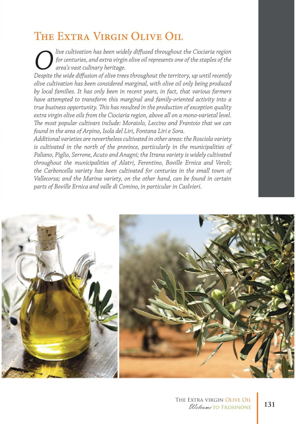 Despite the wide diffusion of olive trees throughout the territory, up until recently olive cultivation has been considered marginal, with olive oil only being produced by local families.