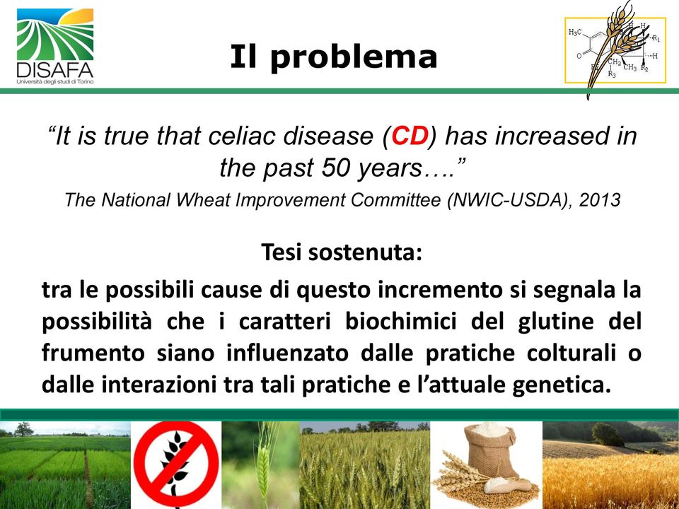 The National Wheat Improvement Committee (NWIC-USDA), 2013 Tesi sostenuta: tra le possibili cause di questo