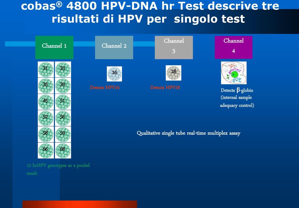 18 Detects HPV18 Detects β-globin (internal sample adequacy control) 58 59