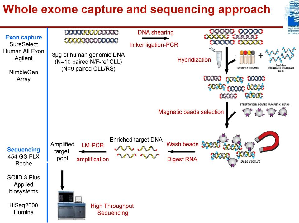 selection Magnetic beads selection Sequencing 454 GS FLX Roche Amplified target pool LM-PCR amplification Enriched target