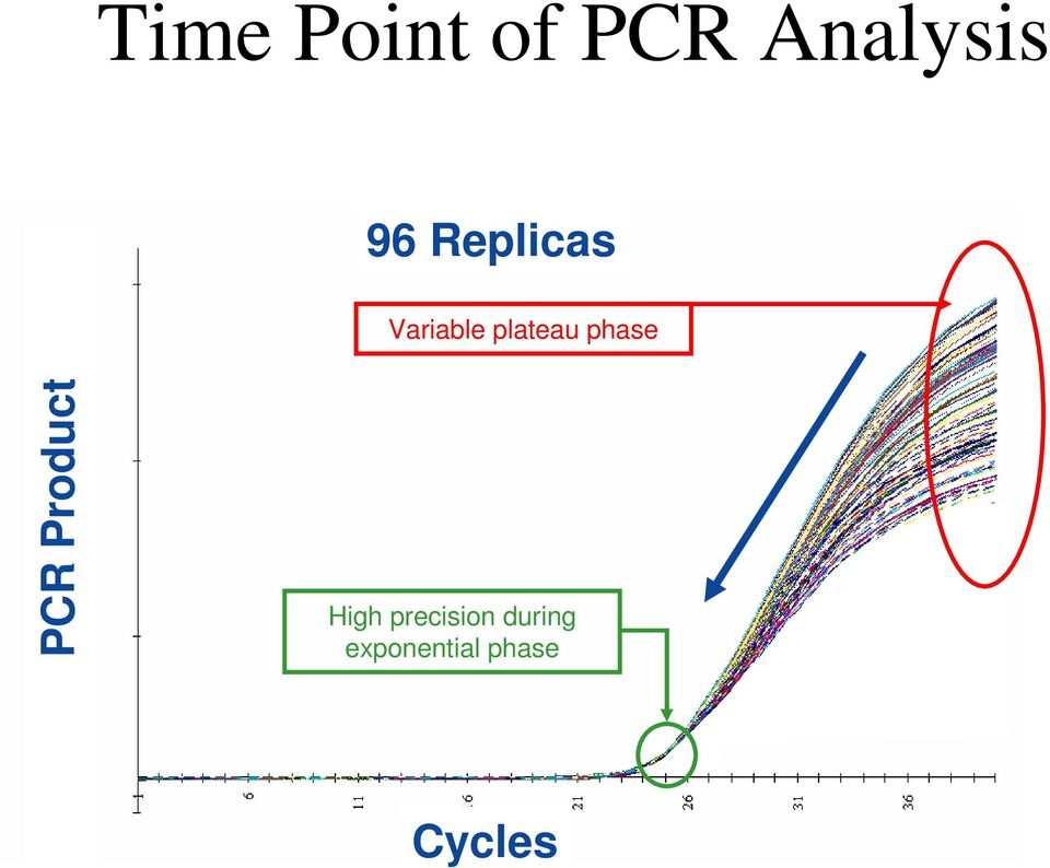 phase PCR Product High
