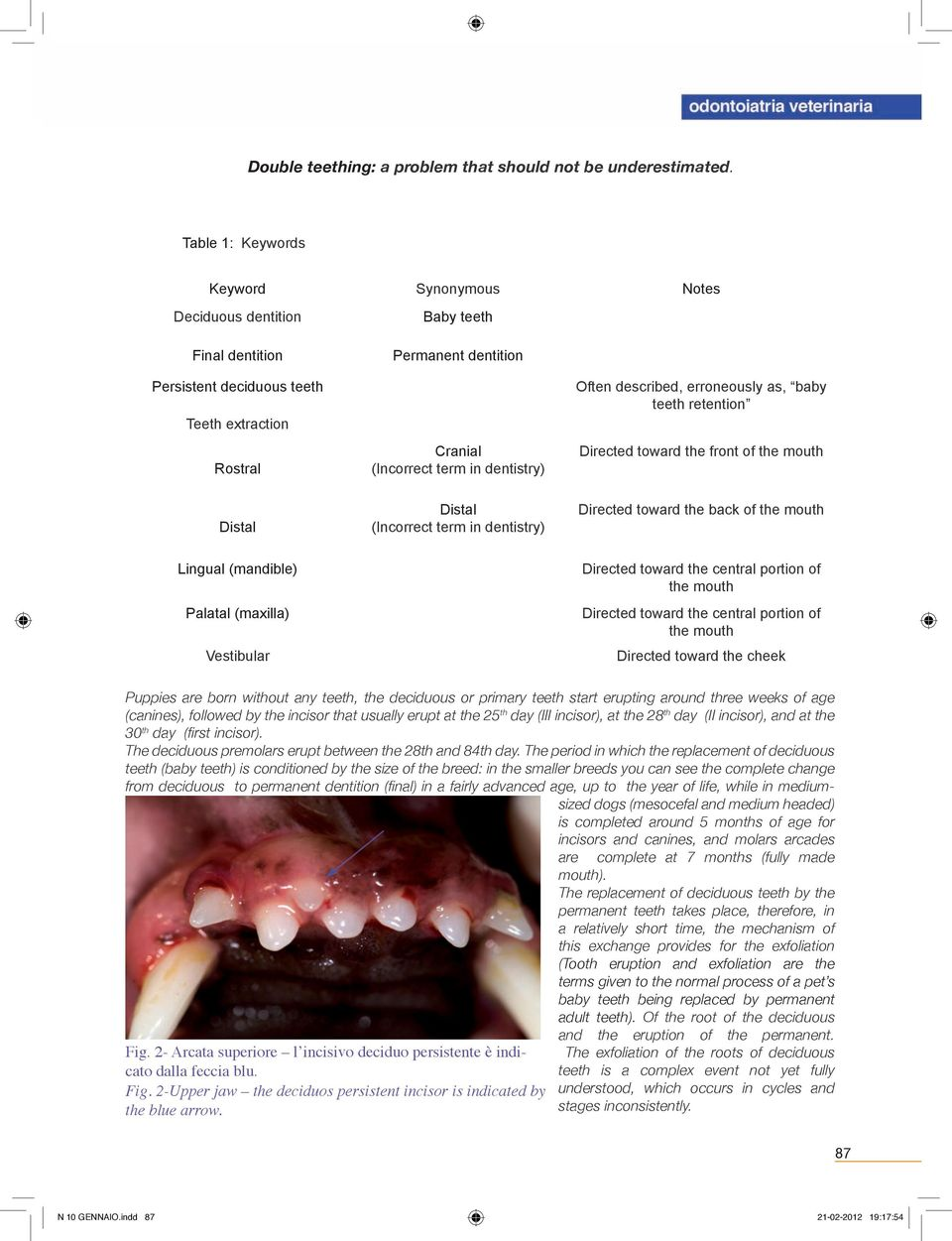 Often described, erroneously as, baby teeth retention Directed toward the front of the mouth Distal Distal (Incorrect term in dentistry) Directed toward the back of the mouth Lingual (mandible)